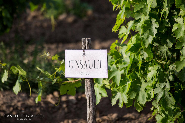 wine tasting for weddings, wine tasting in temecula, temecula wedding photographer tips on choosing wines for your wedding