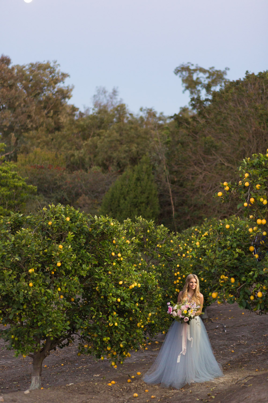 San Diego bride in a lemon grove