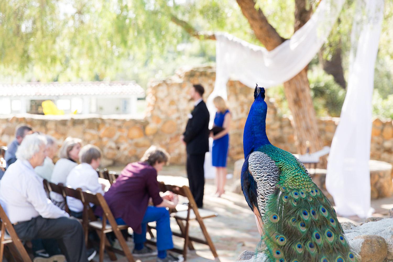Leo Carrillo ceremony with peacocks