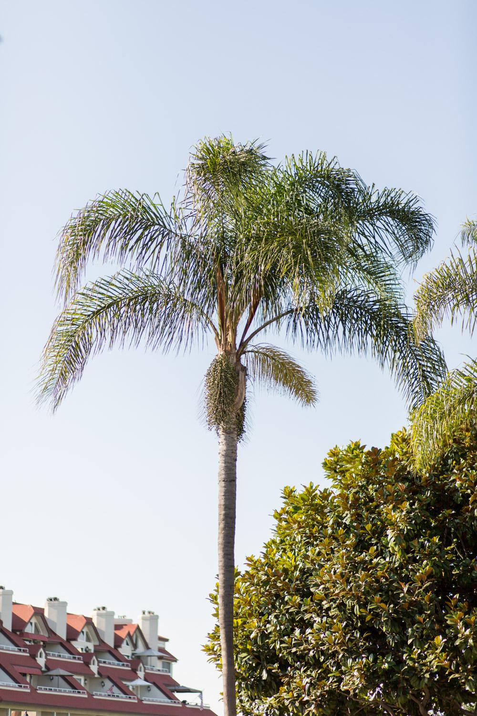 Coronado palm trees in San Diego, Cavin Elizabeth Photography