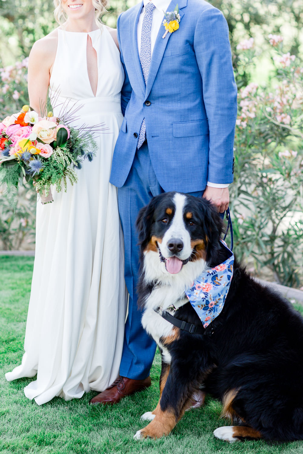 Bride and groom with their St Bernard dog with blue bandana for their La Quinta Resort wedding, Cavin Elizabeth Photography