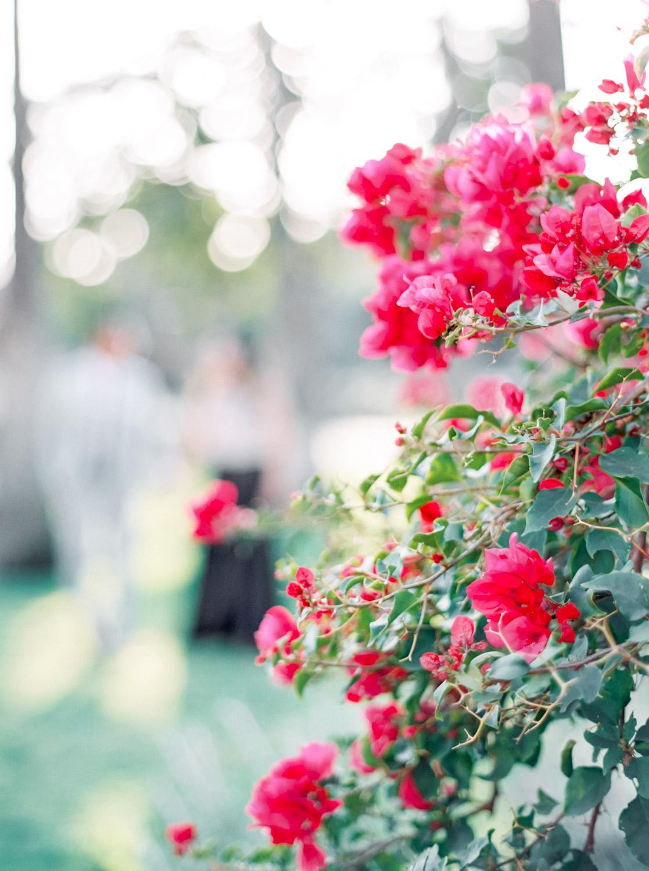Pink bougainvillea on Fuji 400h film, Cavin Elizabeth Photography