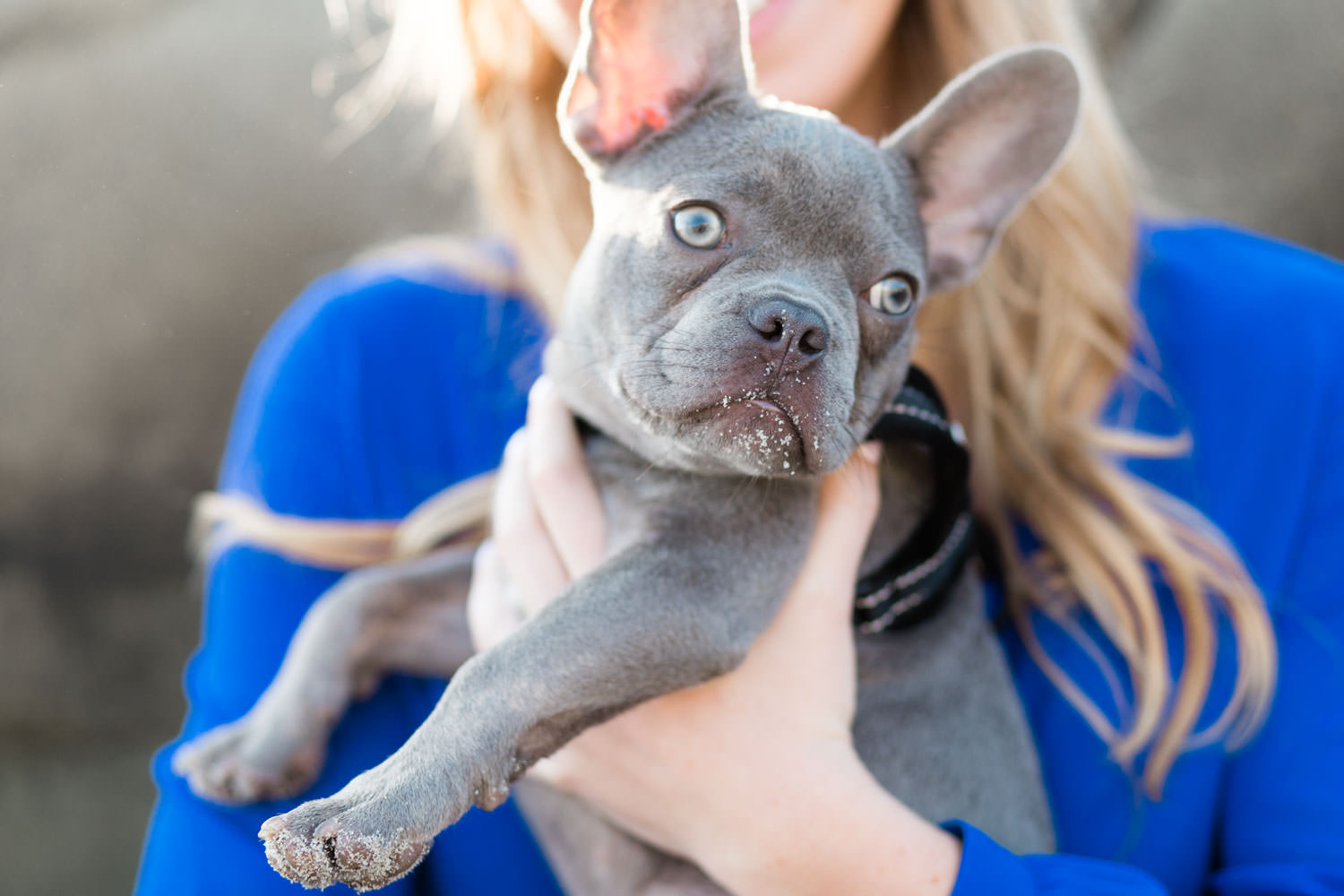 French bulldog puppy during engagement shoot, dogs in engagement photos, Cavin Elizabeth Photography