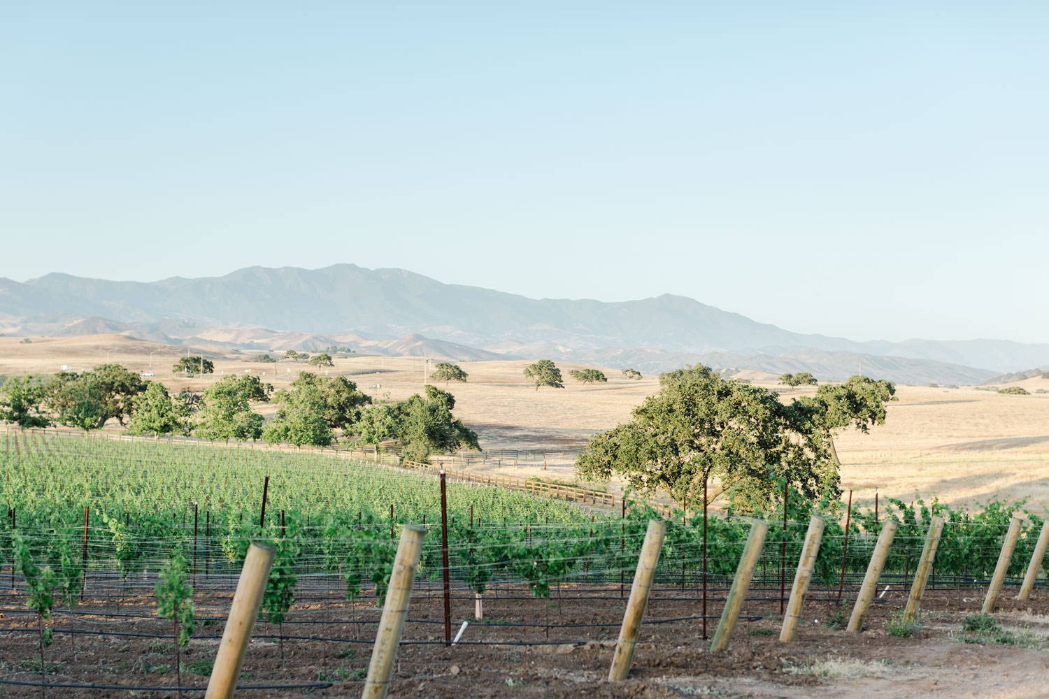 Landscape of Gainey Vineyards with mountains and vines for wedding venue, Cavin Elizabeth Photography