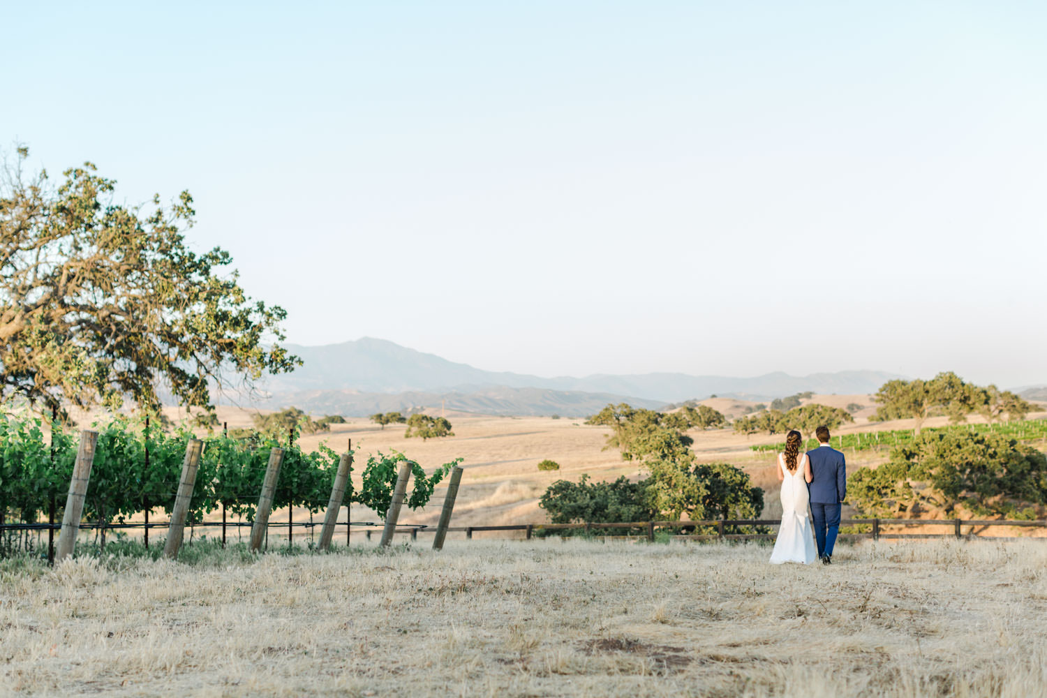 Wide landscape shot of Bride and groom portrait around vineyard vines, Cavin Elizabeth Photography