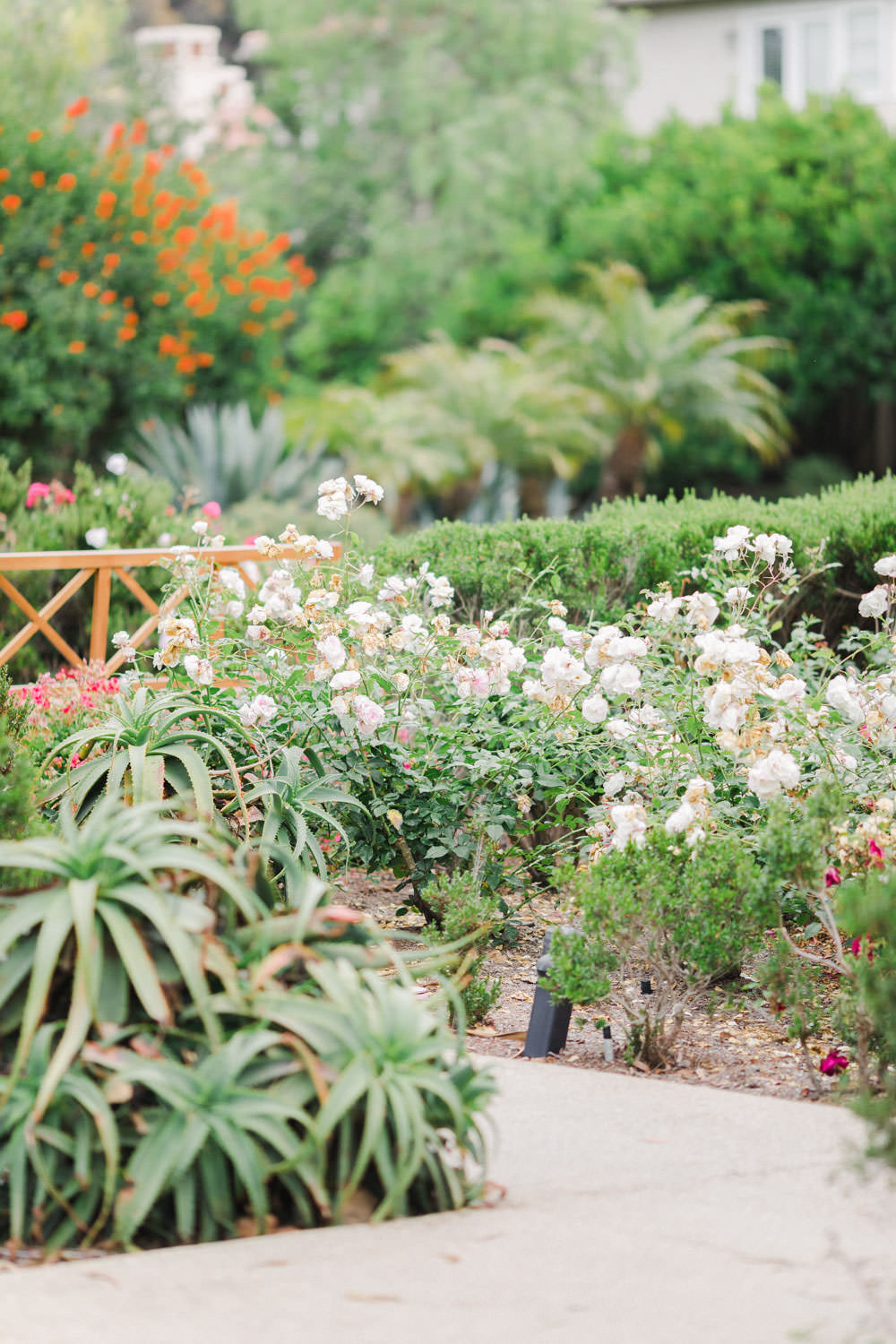Garden roses at Estancia La Jolla, Cavin Elizabeth Photography