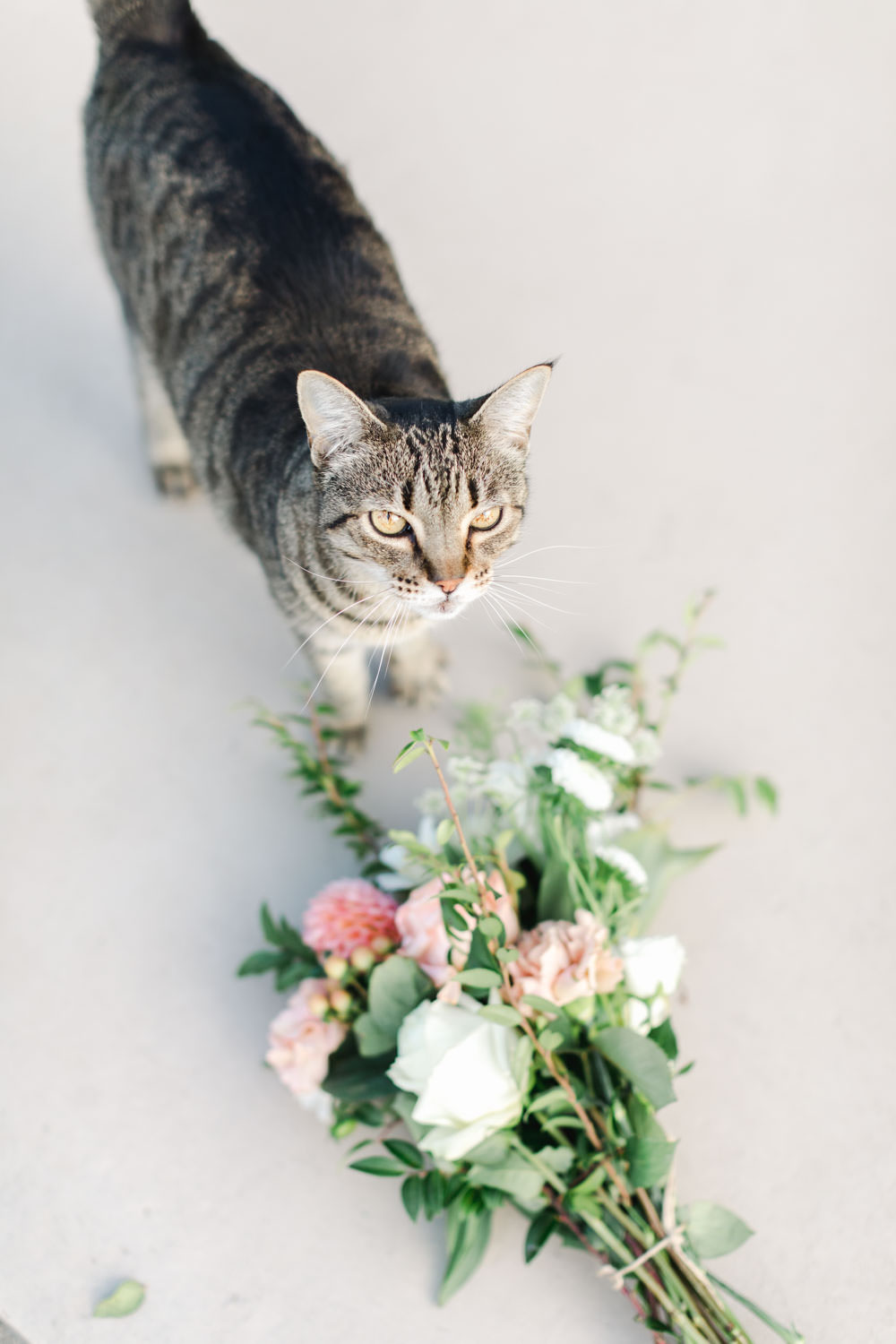 Cat with bouquet during engagement session, Cavin Elizabeth Photography