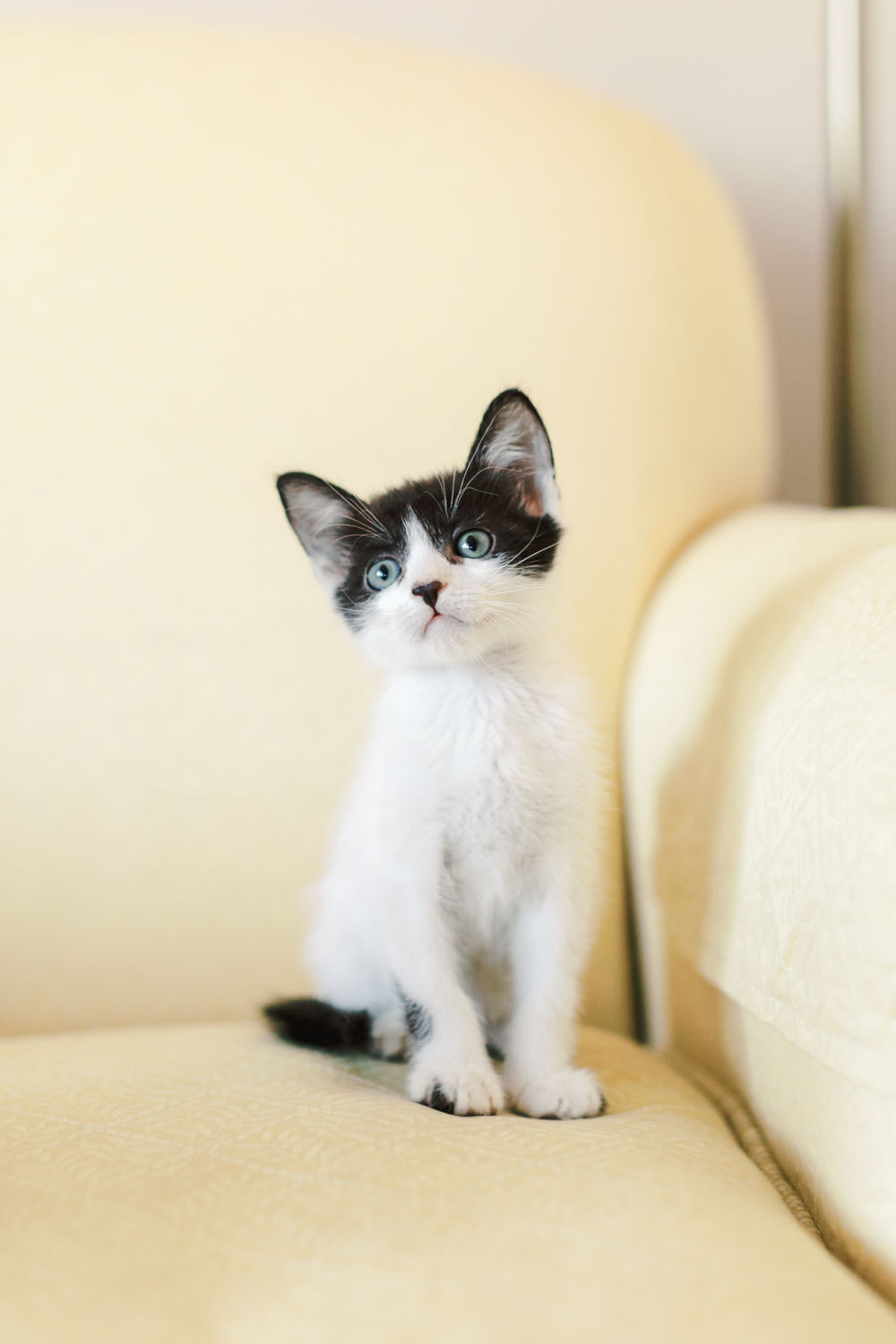 Black and white kitten, Fostering Kittens in San Diego | SD Humane Society, Cavin Elizabeth Photography