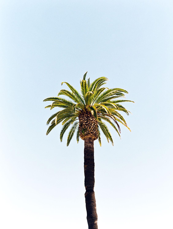 Palm tree captured on film, Wedding at Humphreys Half Moon Inn by Cavin Elizabeth Photography