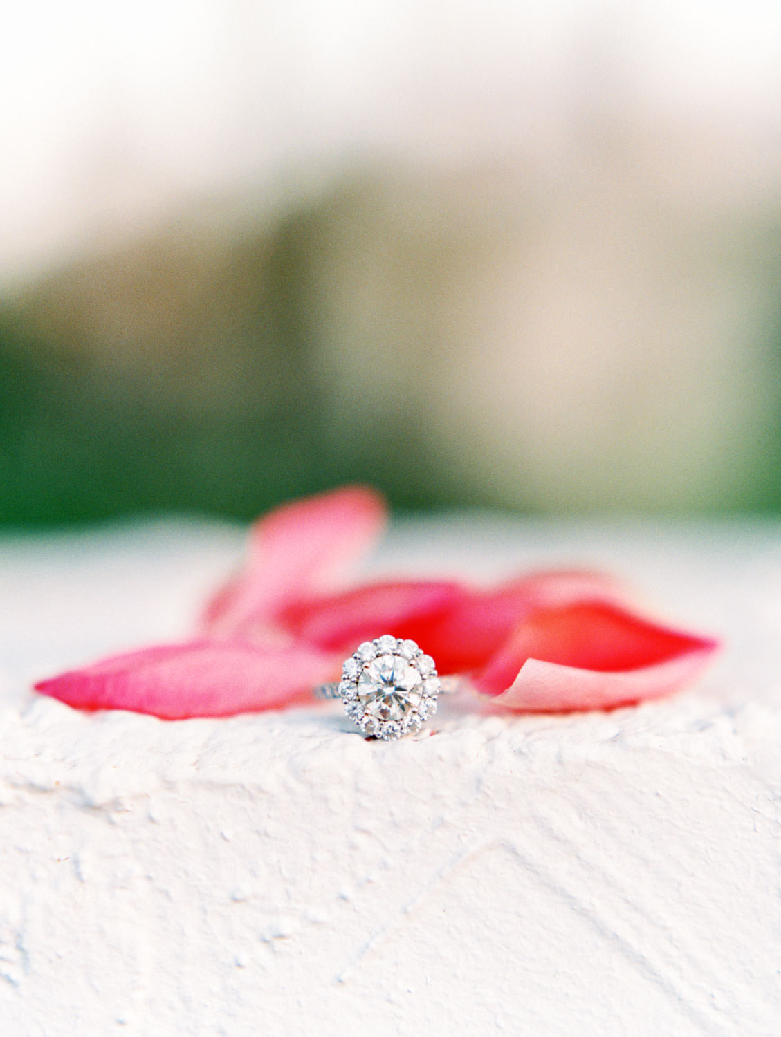 Large round diamond engagement ring surrounded by a large halo styled with pink petals. La Quinta Resort Engagement Photos on Film by Cavin Elizabeth Photography