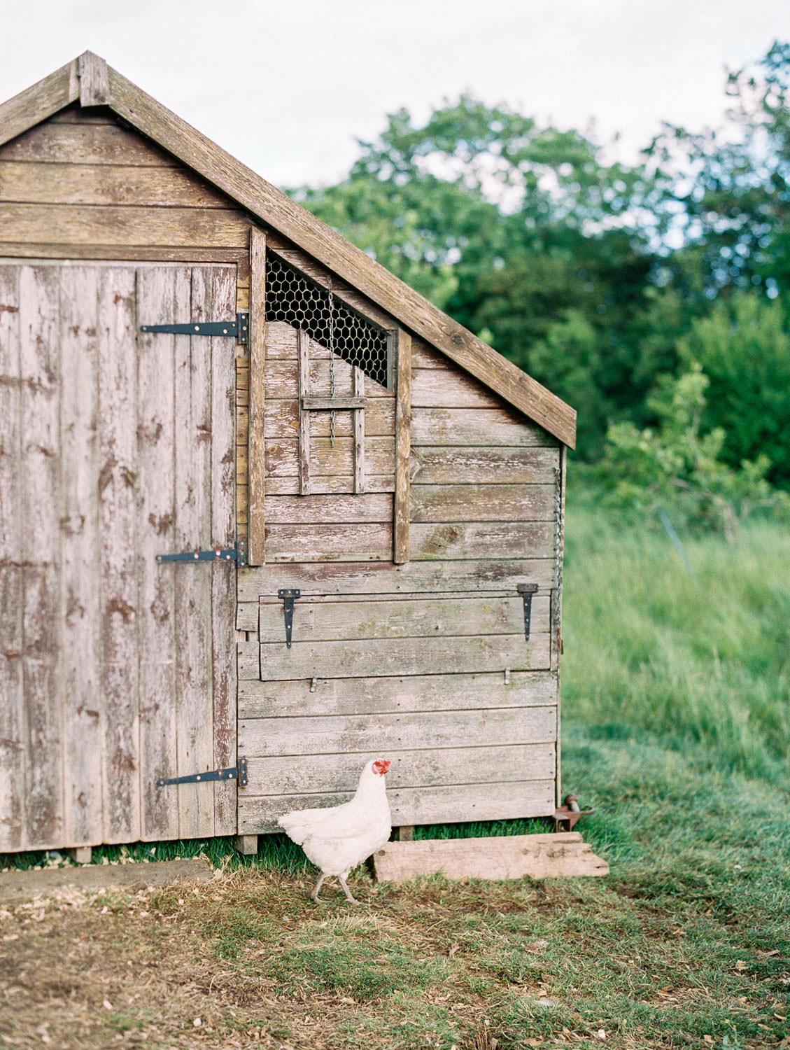 Barnsley House Hotel chicken coop. Flutter Magazine Retreat in the Cotswolds, England. Photo by Cavin Elizabeth Photography on film