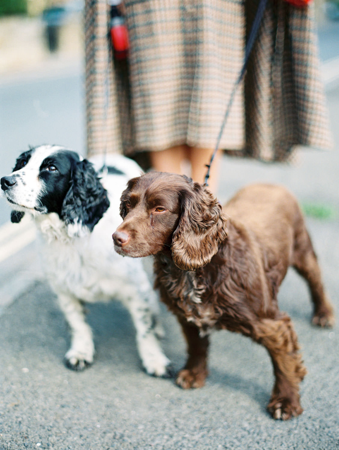 Black and white spaniel and brown spaniel in the Cotswolds. Flutter Magazine Retreat in the Cotswolds, England. Photo by Cavin Elizabeth Photography on film