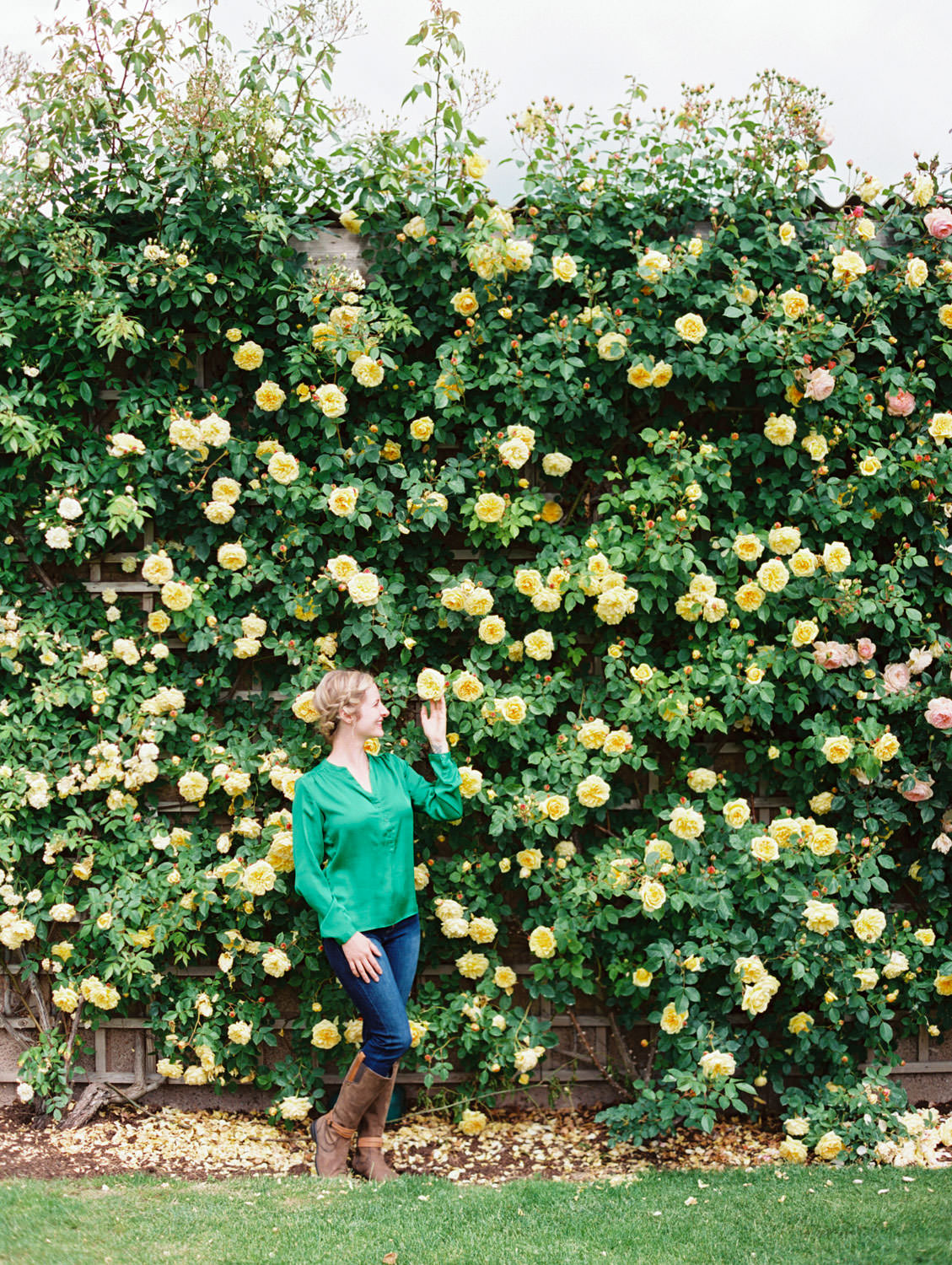 Yellow large rose bush on the wall David Austin Roses in England. Film by Cavin Elizabeth on the Flutter Mag Retreat
