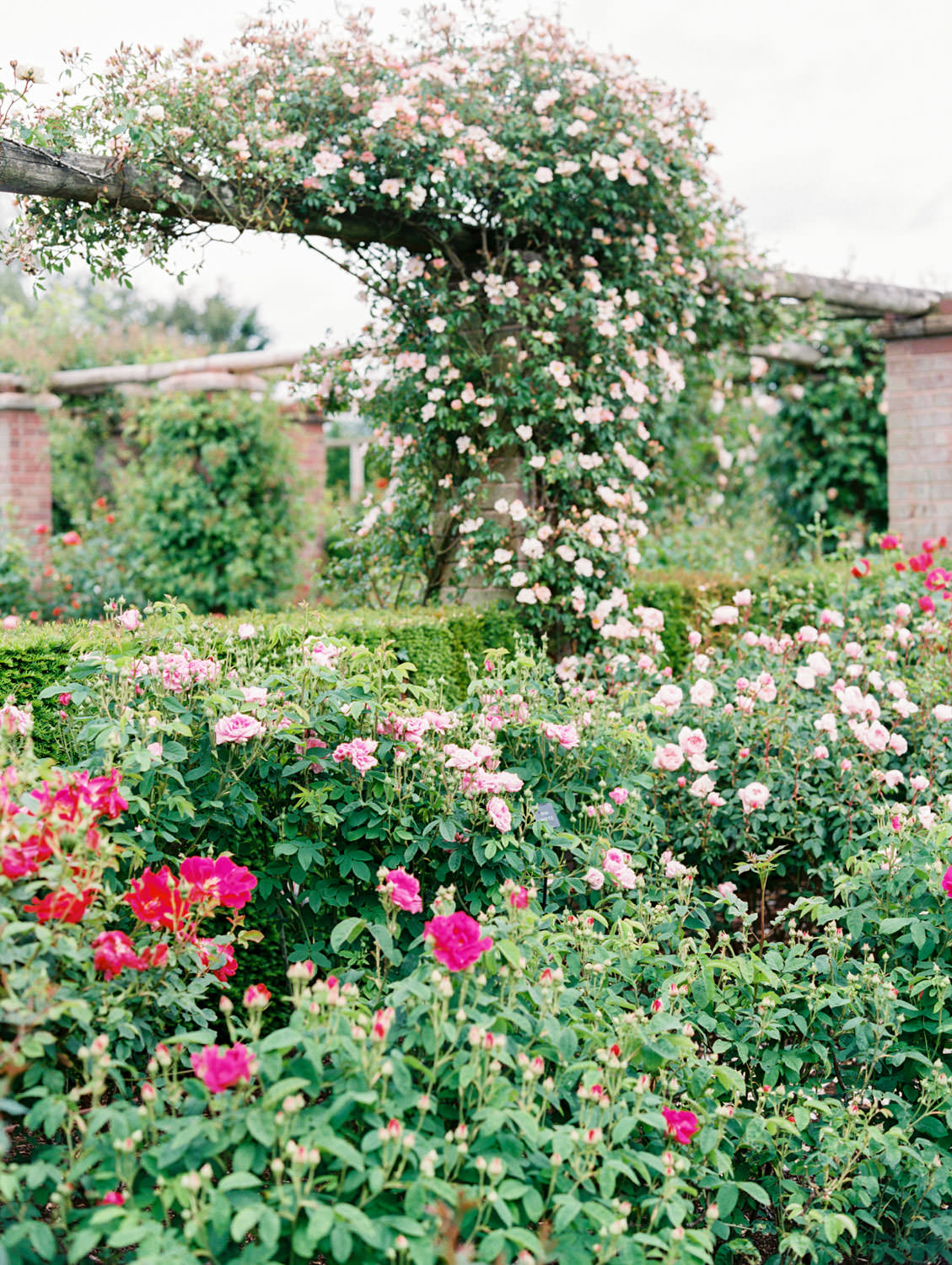 David Austin Roses in England. Film by Cavin Elizabeth on the Flutter Mag Retreat