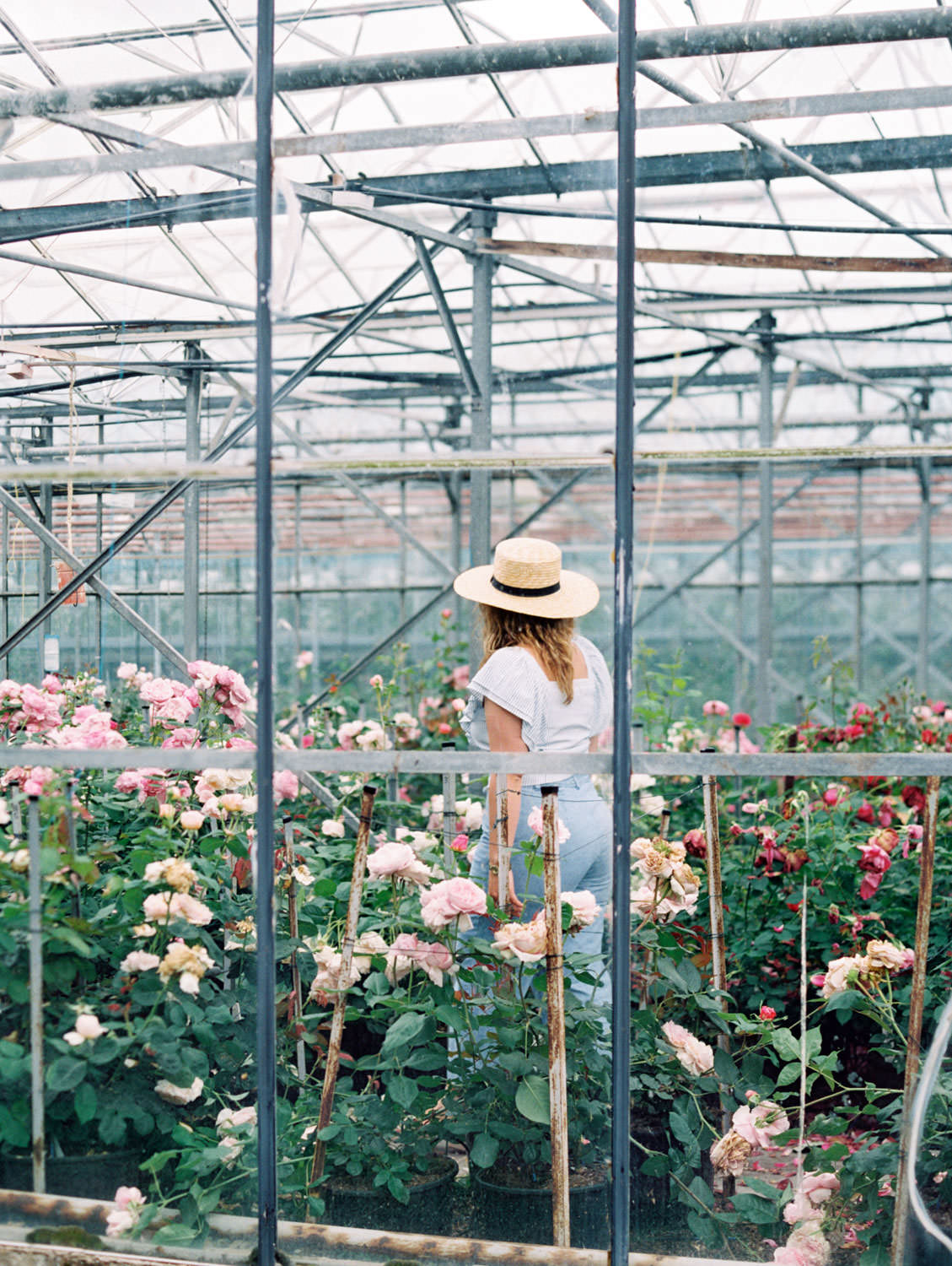 Woman walking through David Austin Roses greenhouse in a sunhat on the Flutter Magazine Retreat in the Cotswolds. Film by Cavin Elizabeth Photography