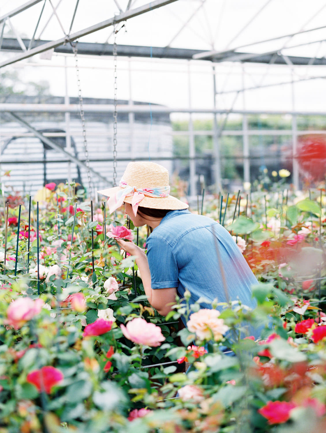 Woman spelling roses in David Austin Roses greenhouse in a sunhat on the Flutter Magazine Retreat in the Cotswolds. Film by Cavin Elizabeth Photography