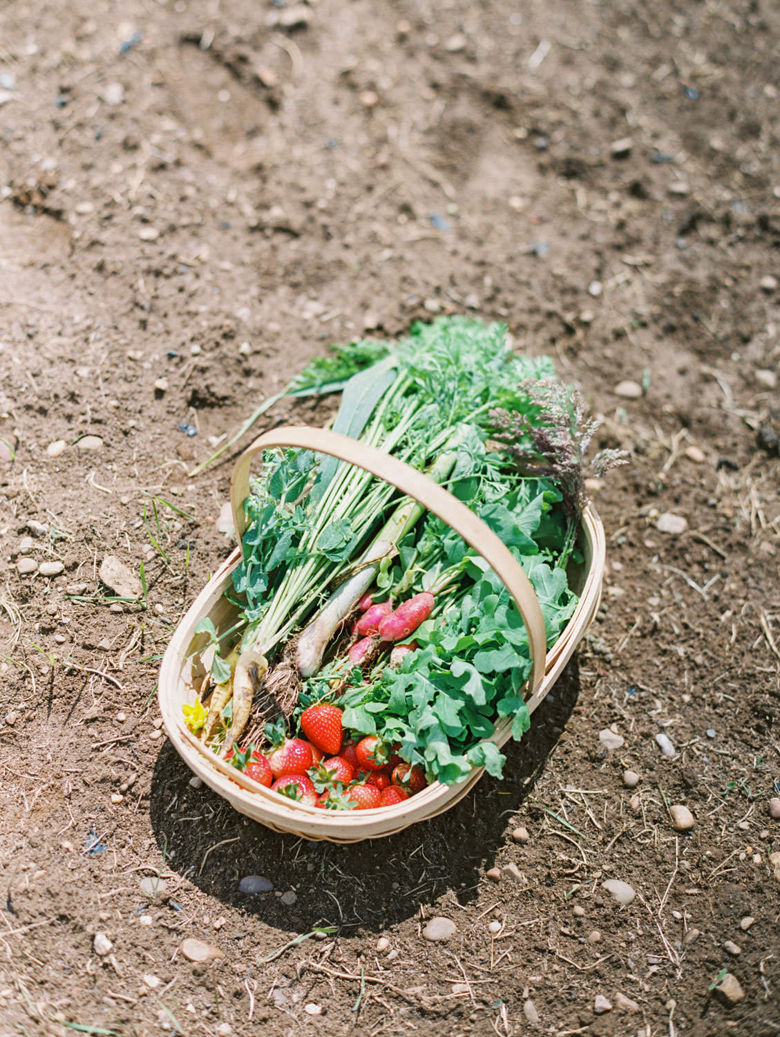 Daylesford Farm wooden basket filled with carrots, radishes, strawberries, arugula, and green onions.. Flutter Magazine Retreat in the Cotswolds, England. Photo by Cavin Elizabeth Photography on film
