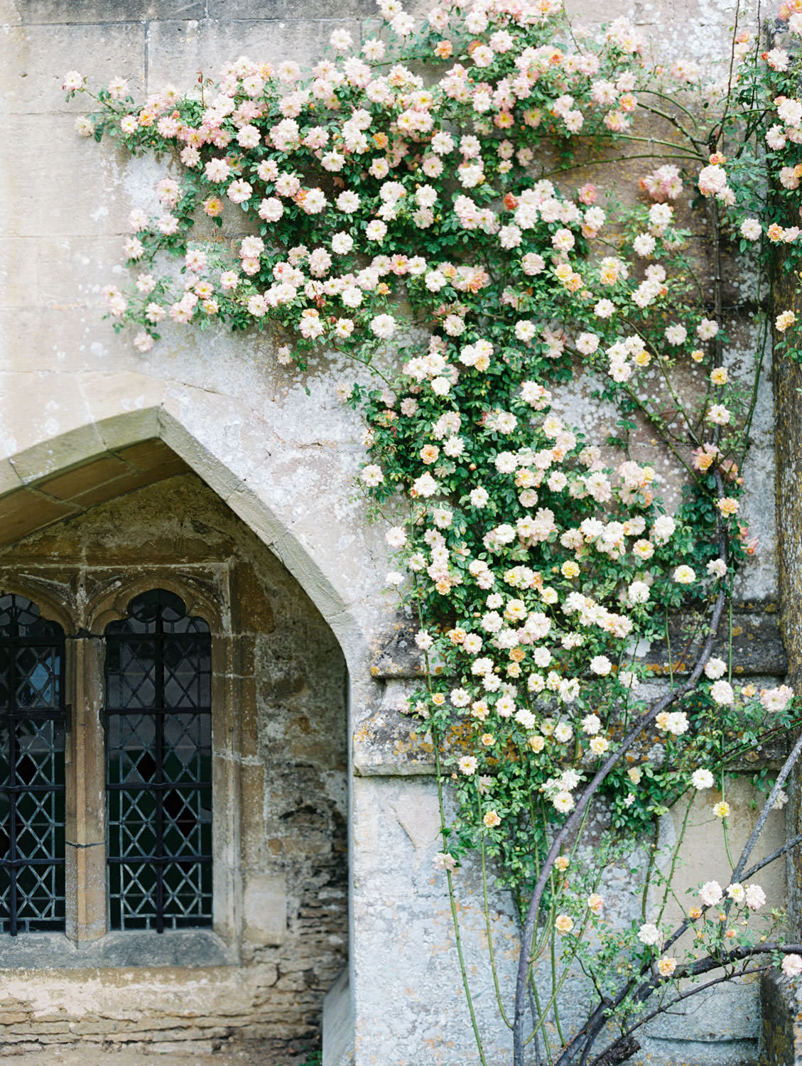Flowers growing up the walls around a window near the Lacock Abbey entrance in England, Cavin Elizabeth Photography