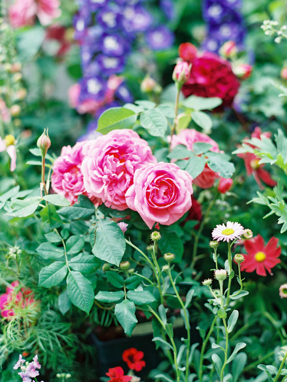 Petersham Nurseries pink flower cart on the Flutter Magazine Retreat, film by Cavin Elizabeth Photography