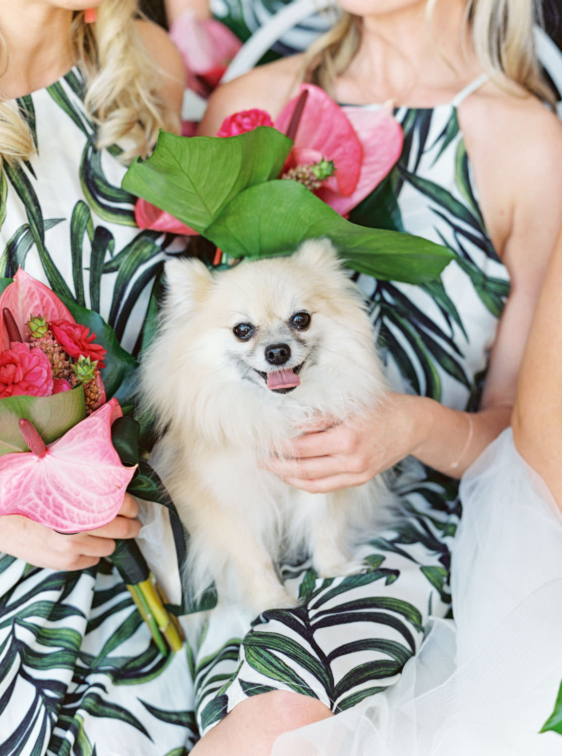Pomeranian in a little doggy wedding dress. Bridesmaids in tropical palm leaf print short dresses carrying bouquets with palm leaves and pink anthurium. Ceremony white pergola site with large white planters filled with palm leaves and paddle cactus plants covered in blush and fuchsia pink flowers. Riviera Palm Springs Wedding by Cavin Elizabeth Photography