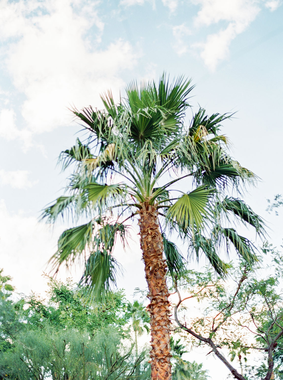 Palm tree at Riviera Palm Springs Wedding by Cavin Elizabeth Photography