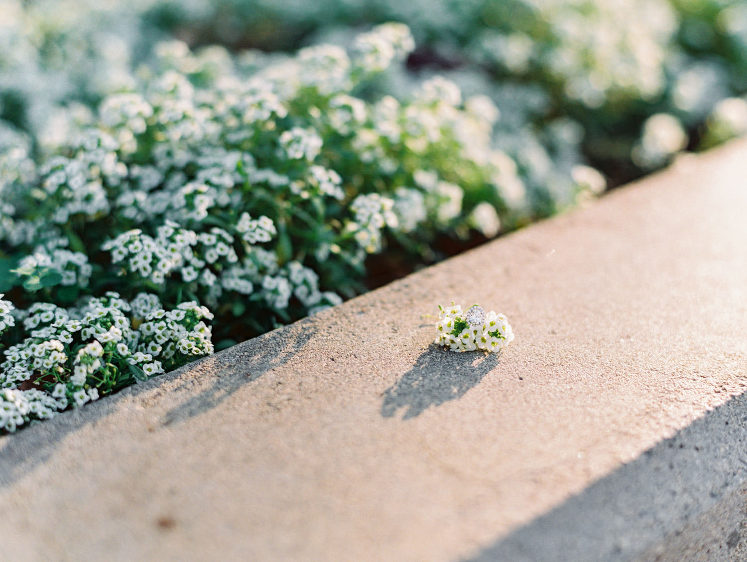 Engagement ring styled with small white flowers. Film photographer Cavin Elizabeth Photography.