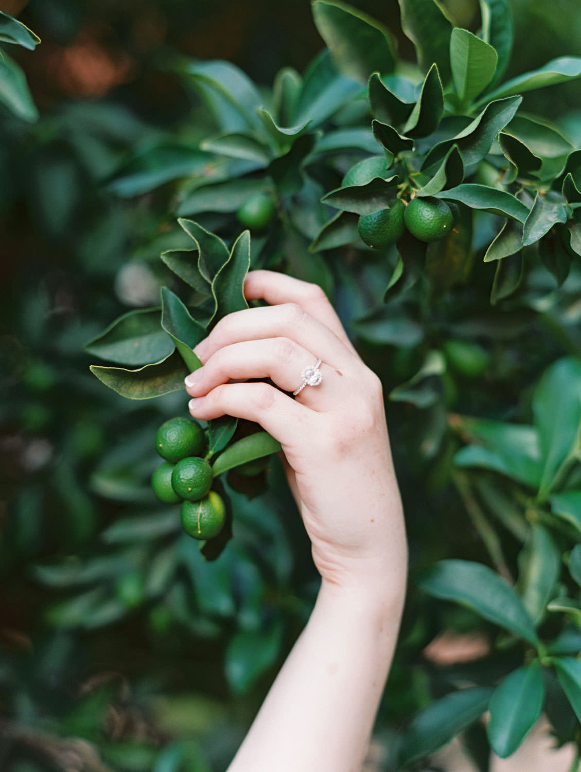 UC Riverside Engagement session in the orange grove. Bride's hand holding unripe oranges and showing off her oval engagement ring with halo. Film photographer Cavin Elizabeth Photography.