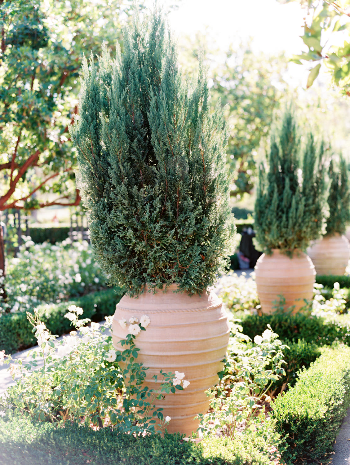 Rose garden large potted trees. Rancho Bernardo Inn Aragon lawn wedding ceremony. Film photo by Cavin Elizabeth Photography