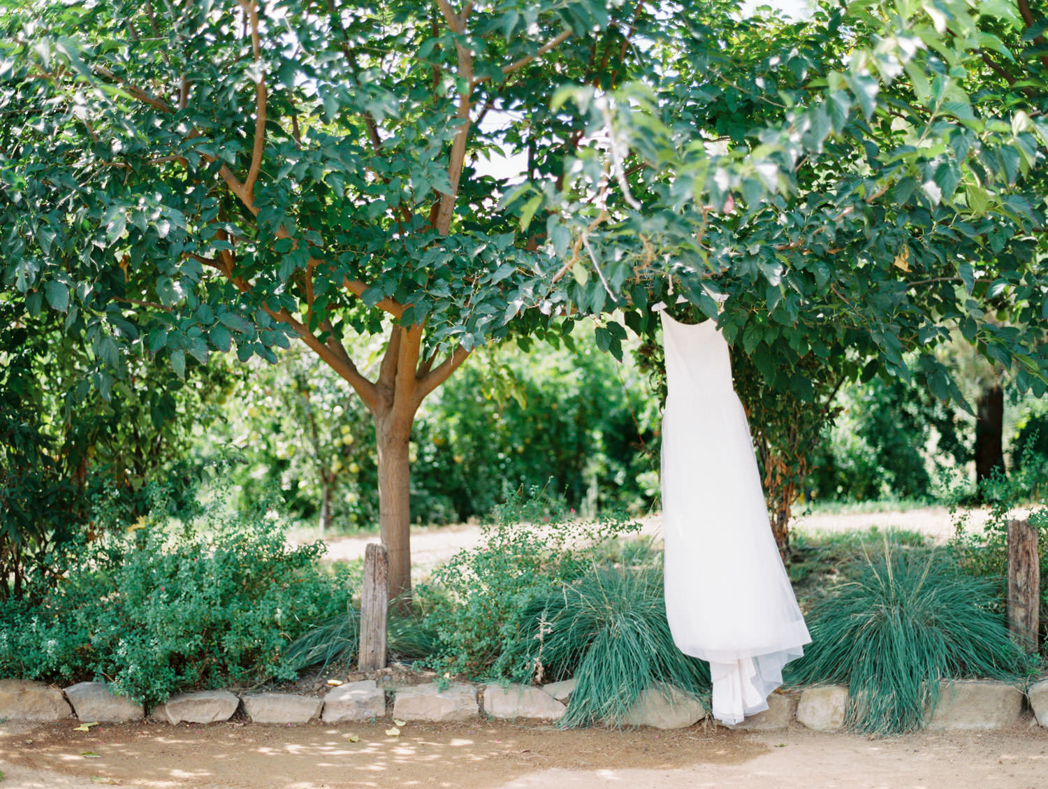 Mikaella Bridal scoop neck wedding dress hanging from a tree on film. Full Belly Farm on Martha Stewart Weddings by Cavin Elizabeth Photography